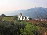 Mole_thumb