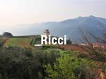 Ricci_thumb